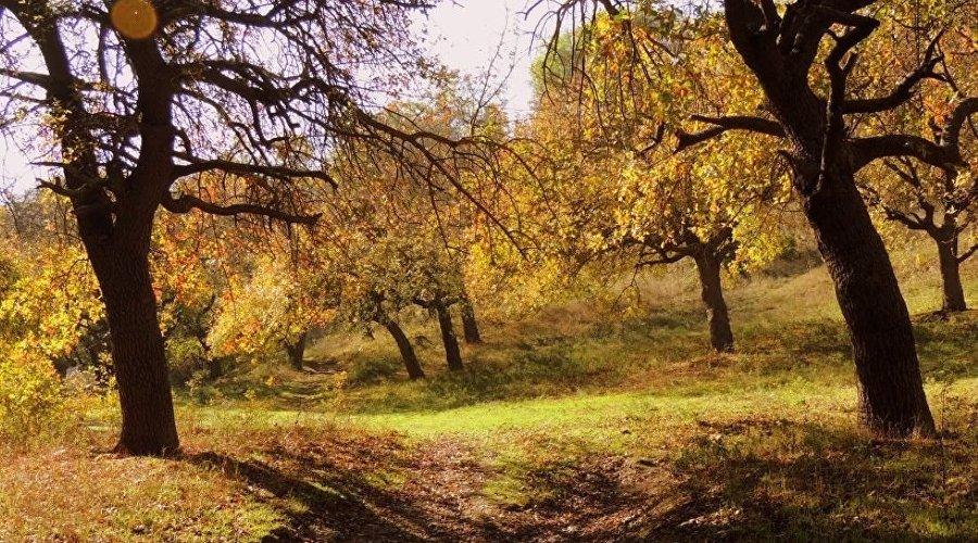 дерево посаженное ушаковым в ушаковой балке севастополя